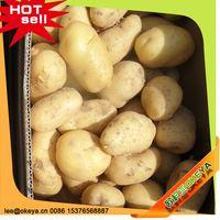 TOP10 Hot Sale China idaho potatoes