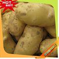 top10 heißer verkauf china Granola kartoffel