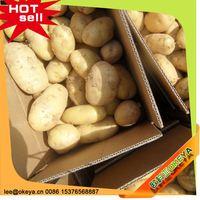 TOP10 Hot Sale China potato exporter association