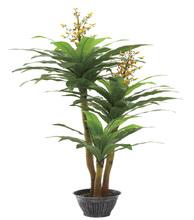 250cm height three stems brazil tree(0096)