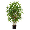 /product-gs/3-foot-green-bamboo-tree-with-natural-trunks-1975252060.html