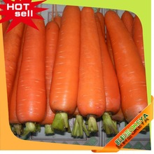 2014 Wholesale Latest fruits and vegetables cold storage