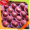 Fruits professionnelle fournisseur salade de fruits décoration