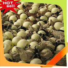 Fruits professionnelle fournisseur filet de protection fruits arbre 2014