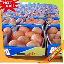 Professional Fruit Supplier video fruit machine 2014