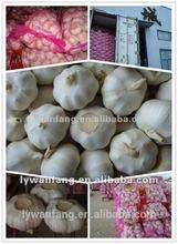 Fresh White Garlic As Garlic Paste Raw Material