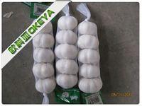 Good Taste Cheap Prices!! garlic price list