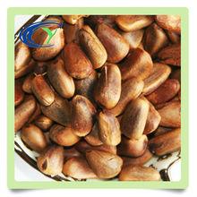 health food pine nut low price