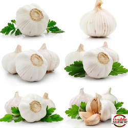 Chinese natural normal white dry garlic exporter