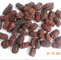 export of dates