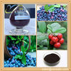 Natural blackcurrant extract powder 25% anthocyanin