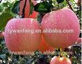 Orgánico fresco Fuji manzano científica nombre de frutas caliente venta