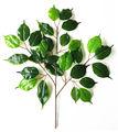 plantas artificiales de goma hojas de los árboles
