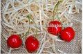 Hot sale natural charme frutas cereja