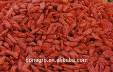 Nutrition & Regimen Dried Goji Berry From NingXia