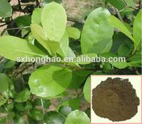 honghao top quality 10:1 light-brown yerba mate extract powder