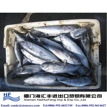 Bulk small size frozen skipjack tuna for Iran market