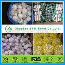 china garlic price 2014/garlic wholesale/normal garlic