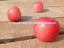 Fresh Delicious Organic Apple Export To Washington