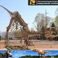 Meu Dino - equipamentos de Playground simulação real fóssil de dinossauro para venda