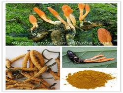 Cordyceps versicolor, polysaccharide 40% , ISO/KOSHER