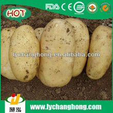 [HOT]chinese fresh potato suppliers/chinese purple sweet potato