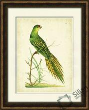 Nodder Tropical Bird IV Wall Art Picture Of Frame