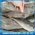 los exportadores de pescado jurel congelado trachurus trachurus