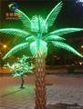 variedades wide mini palmeira