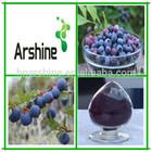 Wholesale Supplement Blueberry pterostilbene extract powder