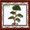 Artificial pine bonsai , intdoor pine tree for decoration