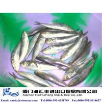 Thailand frozen sardines importers