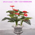 LXY072812 China manufacturer artificial flower plant wholesale bonsai plants cheap artificial anthurium plant
