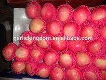 Fresh apple fruit/Chinese fresh apple/Wholesale price apple fruit