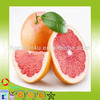 wholesale Chinese Organic Grapefruit juice with low price