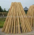 bamboo pole/cane/stick/stake