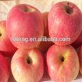 2014 nova safra vermelho royal gala apple com bom preço