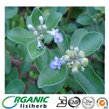 Natural Chasteberry Extract / Vitex Trifolia L. 5%Vitexin