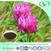 Organic Red Clover Extract Powder,Daidzein/Isoflavone/Sission