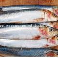 tipos de frutos do mar nome melhor enlatados de sardinha com marcas de private label