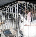 Folding Rabbit Cage For 9 Cells, 12 Cells, 24 Cells