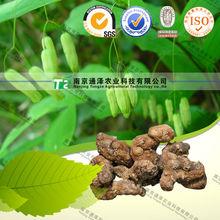 Original Polygonatum Sibiricum, Organic Raw Sealwort, Crude Rhizoma Polygonati High quality Natural