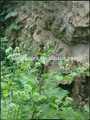 Natural Arctium Lappa pe 10% Arctiin 20362 - 31 - 6 Arctium Lappa L