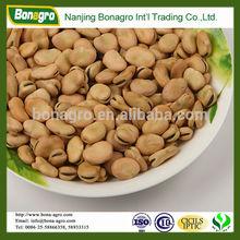 new crop dried broad bean