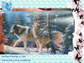 Promotionnels vente chaude populaire 3d image/3d carte/3d animal de dessin animé image