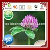 Factory supply 100% Natural Red Clover Extract Biochanin A