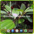 100% Pure Natural High Quality Cinnamon extract /Cortex Cinnamomi Cassiae