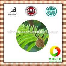 100% Natural sensitive plant extract powder / 10:1 sensitive plant extract