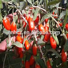 New Crop Dried Ningxia Goji Berries 380/280 Grains per 50g