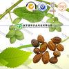Chinese Herb Medicine Fructus Terminaliae Billericae